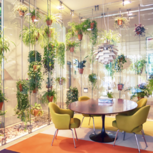 Biophilia office design