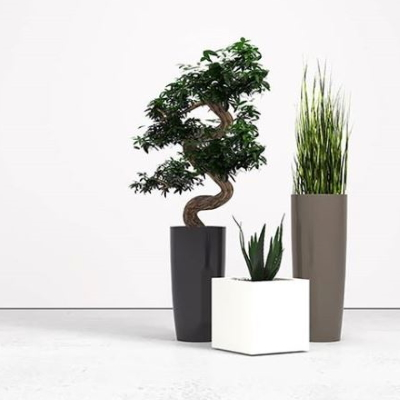 Artificial Plants for Offices